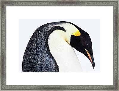 Snow Hill, Antarctica Framed Print