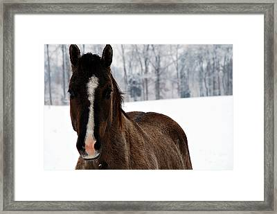 Snow Horse Framed Print