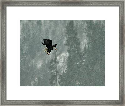 Snow Hunt Framed Print by Annie Pflueger