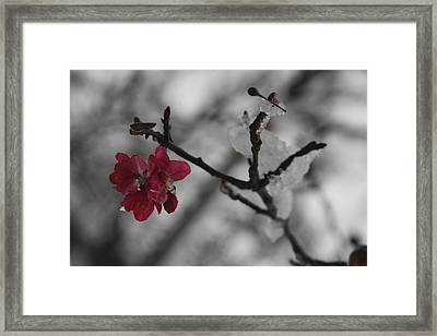 Snow In October Framed Print