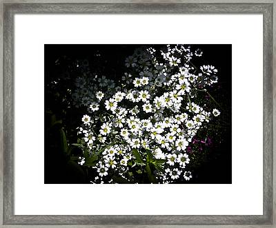 Framed Print featuring the photograph Snow In Summer by Joann Copeland-Paul