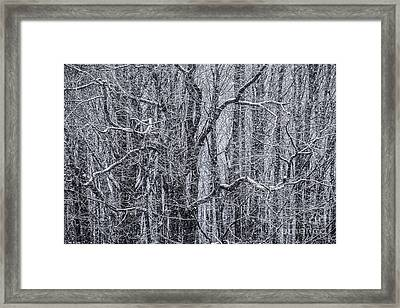 Snow In The Forest Framed Print by Diane Diederich