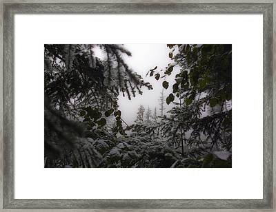 Framed Print featuring the photograph Snow In Trees At Narada Falls by Greg Reed
