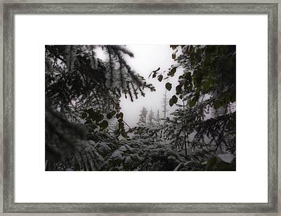 Snow In Trees At Narada Falls Framed Print