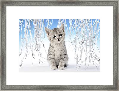 Snow Kitten Framed Print by Greg Cuddiford