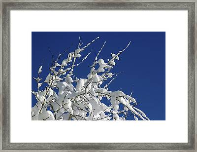 Snow Laden Framed Print