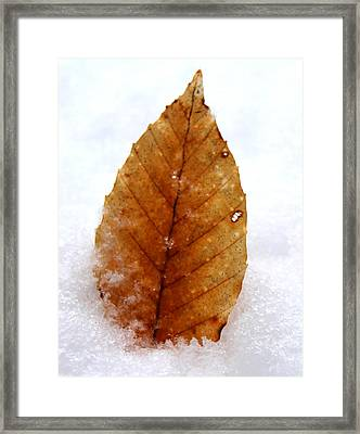 Framed Print featuring the photograph Snow Leaf by Candice Trimble