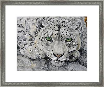Snow Leopard Big Cat Oil Painting Hand Painted 8 X 10 Made To Order By Pigatopia Framed Print by Shannon Ivins