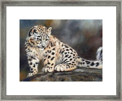 Snow Leopard Cub Framed Print by David Stribbling