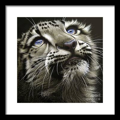 Snow Leopard Framed Prints