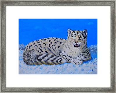Snow Leopard Framed Print by David Hawkes