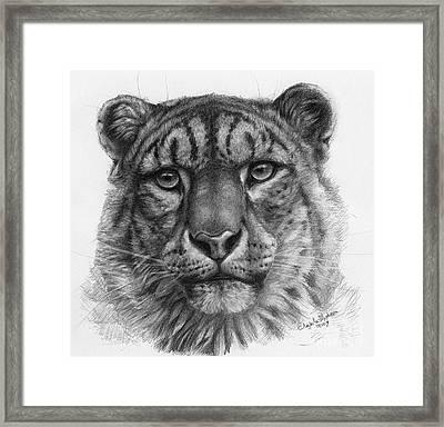 Snow Leopard - Panthera Uncia Portrait Framed Print by Svetlana Ledneva-Schukina