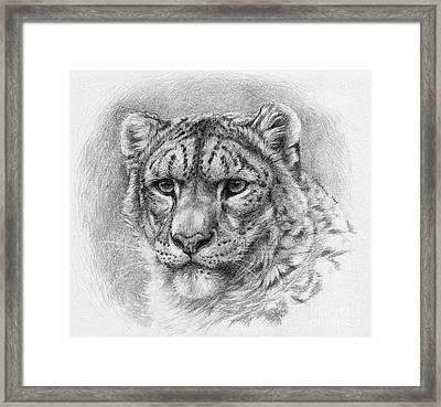 Snow Leopard - Panthera Uncia Framed Print by Svetlana Ledneva-Schukina