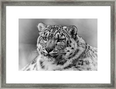 Framed Print featuring the photograph Snow Leopard Portrait by Chris Boulton
