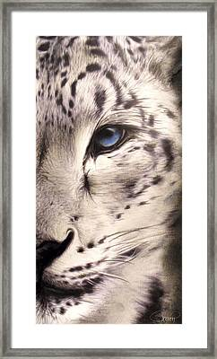 Snow Leopard Framed Print by Sheena Pike