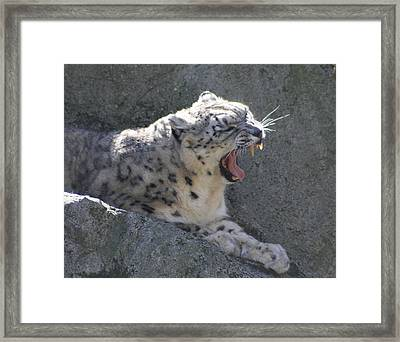 Framed Print featuring the photograph Snow Leopard Yawn by Neal Eslinger