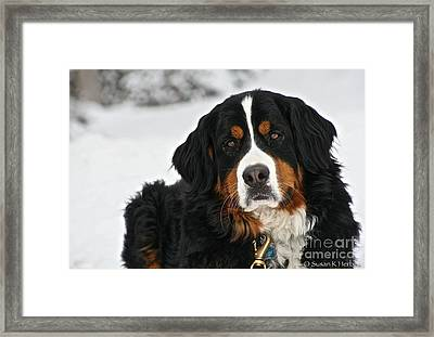 Snow Lounging Framed Print by Susan Herber
