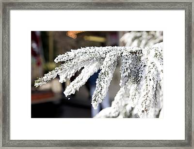 Snow On A Branch Framed Print by Pati Photography