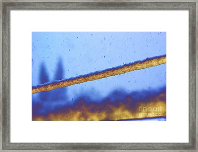 Snow On Line Framed Print by Carol Lynch