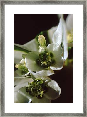 Snow On Mountain Framed Print by Retro Images Archive