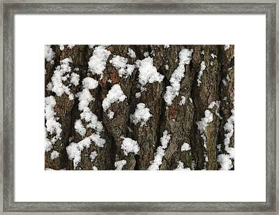 Snow On Pine Bark Framed Print