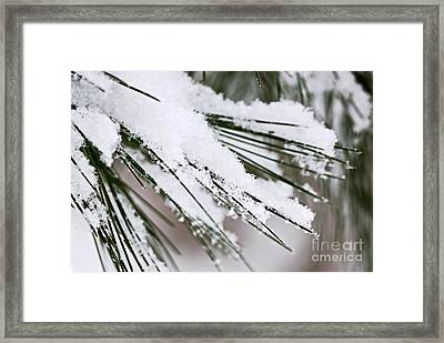 Snow On Pine Needles Framed Print