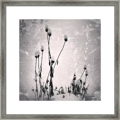 Snow On Pods Framed Print by Patricia Januszkiewicz