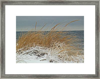 Snow On The Dunes Framed Print by Nancy Landry