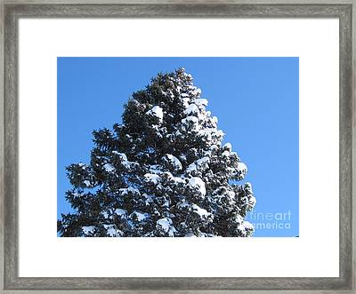 Snow On The Pine Framed Print by Donna Cavender
