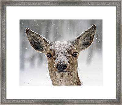Snow On The Roof Framed Print