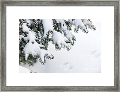 Snow On Winter Branches Framed Print