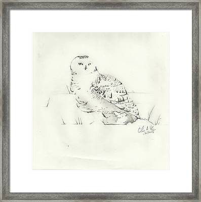 Snow Owl In Field Framed Print by Christopher Hughes