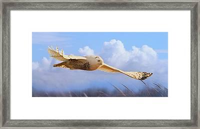 Snow Owl In Flight Framed Print