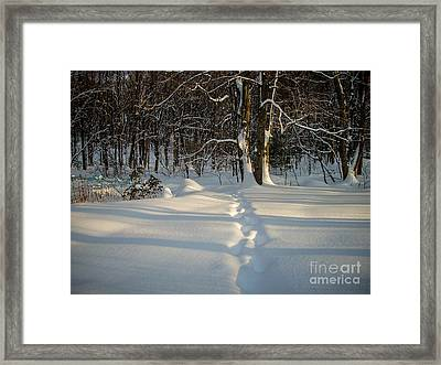 Snow Path Framed Print by Randi Shenkman