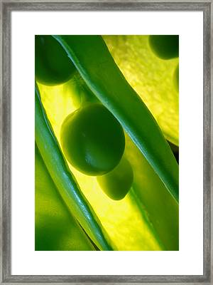 Snow Peas In Macro Framed Print by Dung Ma
