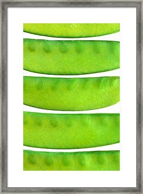 Snow Peas Framed Print