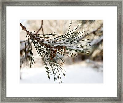 Framed Print featuring the photograph Snow Pine by Courtney Webster