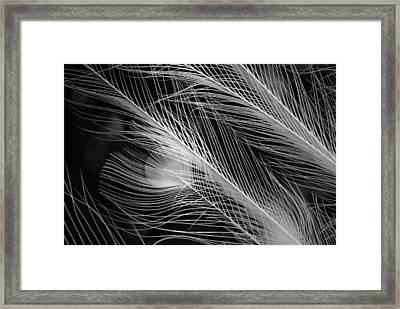 Snow Plumage Framed Print