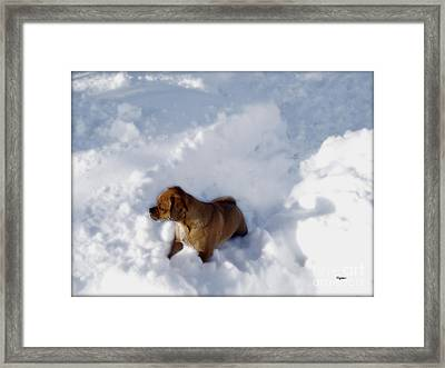 Snow Puggles  Framed Print by Steven  Digman