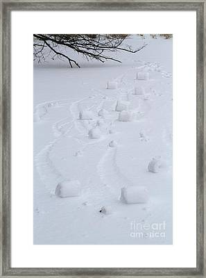 Snow Rollers Framed Print