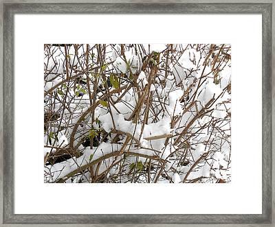 Snow Scene 16 Framed Print by Patrick J Murphy