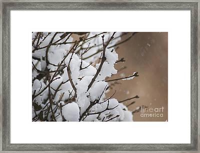 Snow Shower Framed Print