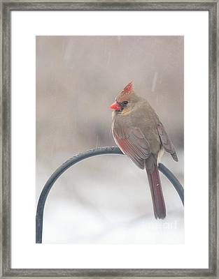 Snow Shower Framed Print