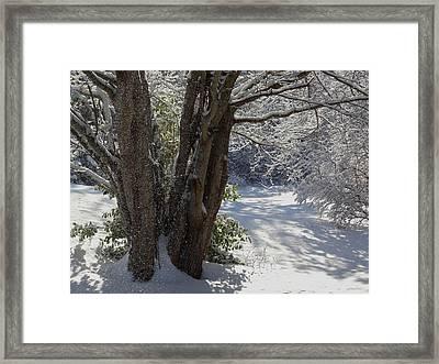 Snow Sparkles Framed Print