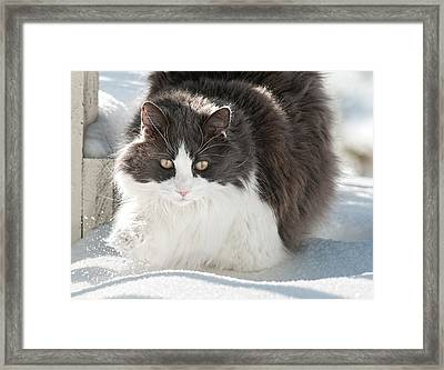 Framed Print featuring the photograph Snow Sticks To Your Paws by Lara Ellis