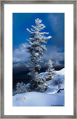 Snow Storm Tree Framed Print by Mountain Panda Photography