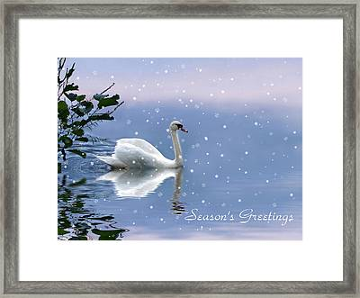 Snow Swan  Framed Print