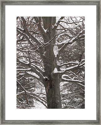 Framed Print featuring the photograph Snow Tree by Melissa Stoudt