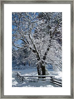 Snow Tree - Yosemite National Park Framed Print by Jim Pavelle