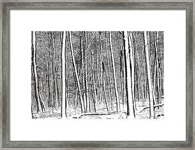 Snow Trees Framed Print